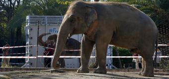 'World's loneliest elephant' rescued from 35-year hell