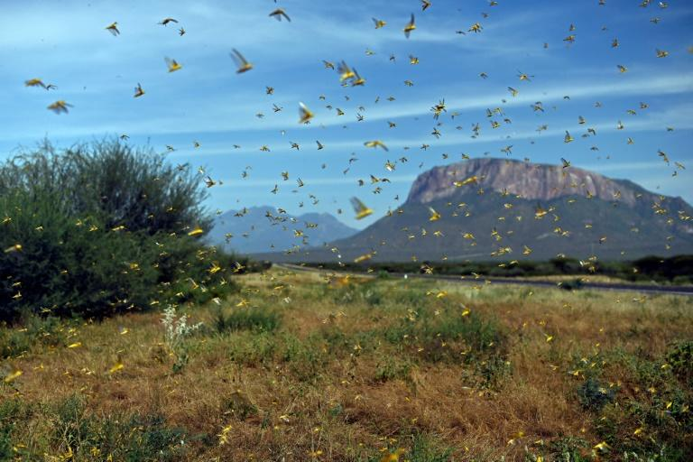 United Nations releases $10m to fight devastating East Africa locust swarms