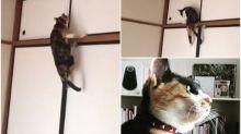 【新片速報】日本「刺客喵」挑戰高難度 玩命片Twitter熱傳