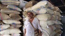 Colombia entregará 19,4 mln dlr adicionales en ayuda a productores de café