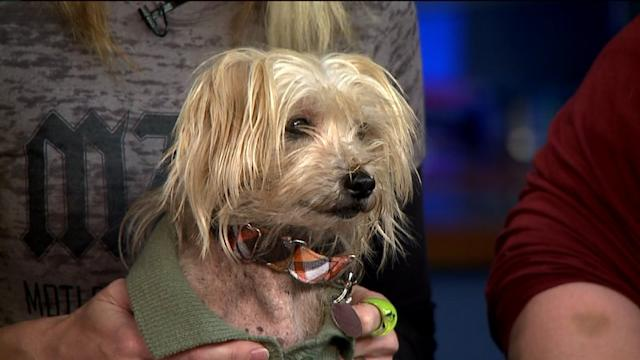 Shelter Helps Dying Dog Check Off His Bucket List