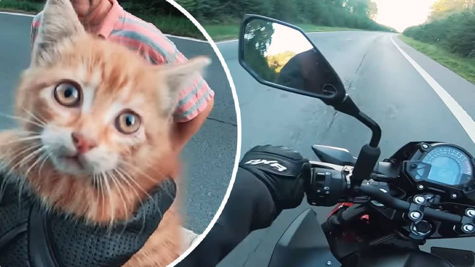 The moment two men stop traffic to save this stranded kitten