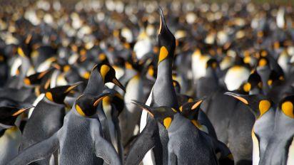 Emperor penguins suffer 'catastrophic' breeding failure