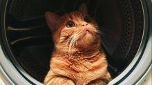 Dimentica il gatto nella lavatrice: l'animale sopravvive al lavaggio