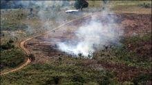 Im vergangenen Jahr 159.000 Hektar Wald in Kolumbien abgeholzt