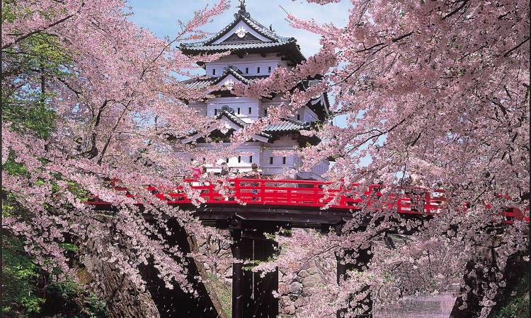 弘前櫻花祭