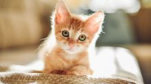 Looking at Adorable Kitten and Puppy Photos Could Save a Stale Marriage
