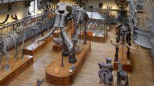 """Paris : un appel aux dons pour restaurer un squelette de mammouth """"très grand et en mauvais état"""""""