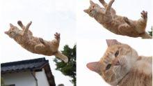 日本「飛躍貓咪」自信表情 貓貓拳新作Twitter熱傳