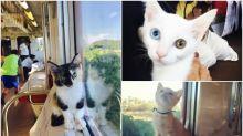 【多圖】日本貓Cafe列車 80人和浪貓同遊