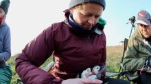 How the pandemic pushed puffin research back years