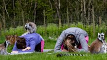 Travel on Trial: How I found zen in the pen with lemur yoga in the Lake District