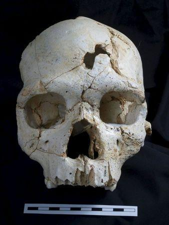 Handout of the skull of a prehistoric human relative that lived 430,000 years ago