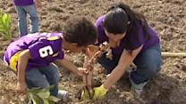 Arbor Day volunteers plant trees in Houston