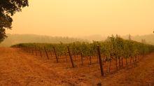 """""""Un film d'apocalypse"""" : dans l'Oregon, des vignerons français inquiets face aux feux"""