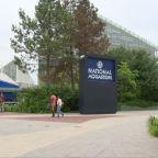 National Aquarium Lost $12M While Closed Due To Coronavirus Pandemic