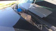 Anidó en un coche patrulla y los policías le hicieron esto…