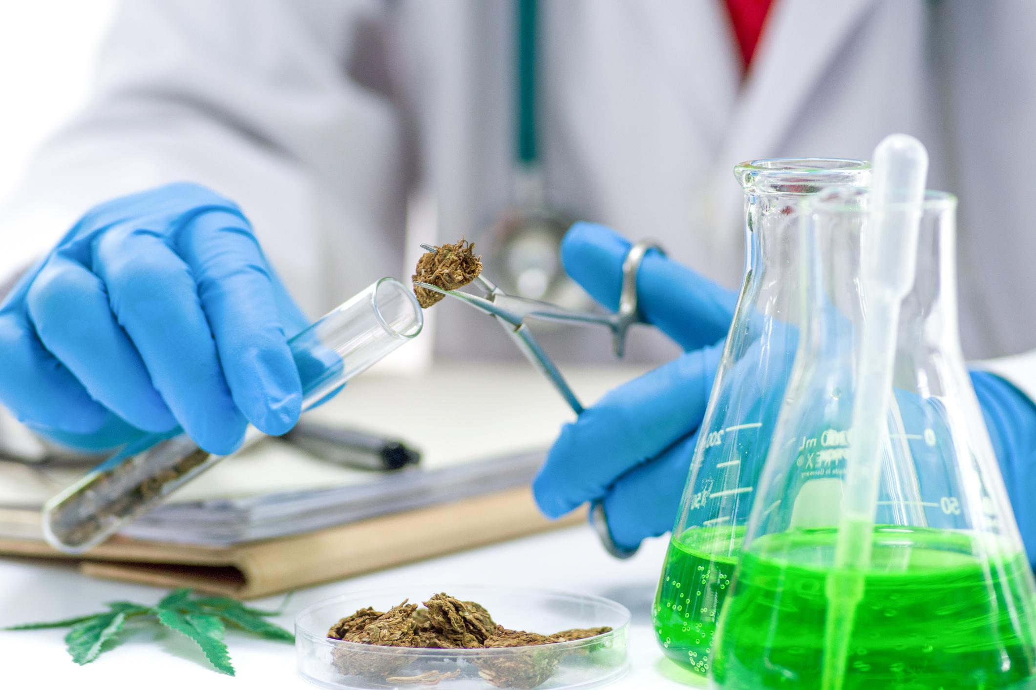 Degree in weed: Where you can now study marijuana