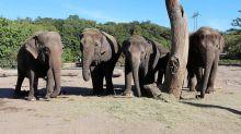 Umbau der Anlage: Tierpark Berlin: So läuft der Umzug der Elefanten ab