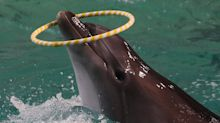 Dolphin shows to be outlawed in NSW as new law passes
