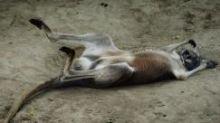 Brick-throwing China zoo-goers kill kangaroo, injure another