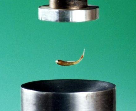Chinese mad scientists levitate fish with sound