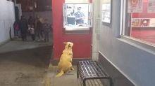 El Güero, la historia de un perro callejero que diario va a cenar a un KFC del Estado de México