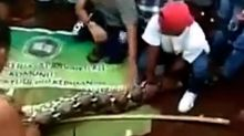 Woman swallowed whole by 23-foot python in Indonesia