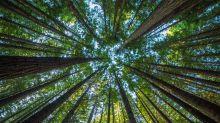 """El """"eslabón perdido"""" de la inmortalidad: en el ADN de las plantas podría estar la clave para retrasar el envejecimiento humano"""