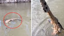 'Someone had taken its skin': Fisherman's disturbing discovery in NSW river
