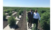 Cannabis Science and Free Spirit Organics Native American Corporation Report Positive Analytical Lab Results From Its 250-Acre, Industrial Hemp Research Project in San Joaquin Sovereign Tribal Free Land MBS, California
