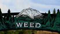 The Town of Weed