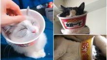 日本貓奴自製杯麵版「貓喇叭」 大量相集原來好普遍