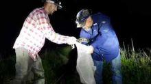 Florida Snake Catcher Captures Python Close to a Gator