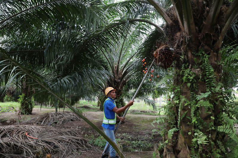 Malaysia's Sime Darby Plantation posts strong Q2, to cut ...