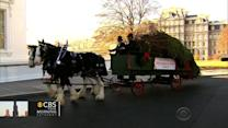 White House Christmas tree arrives