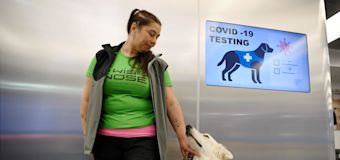 Dogs to sniff out COVID-19 at NBA arena