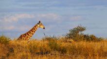 Female giraffe hunter scorned for posing with dead 'once-in-a-lifetime dream hunt'