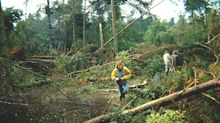 How the 1987 Great Storm transformed the English landscape and changed our forests forever