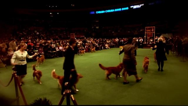 Westminster Kennel Club Rule Change Boosts Competition