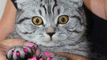 Fundas postizas de uñas de gato, ¿es positivo para ellos?