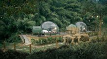 不要再去騎大象!以自然方式近距離親近 泰國酒店推出「雨林泡泡」房
