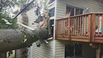 Falling Tree Nearly Crushes Washington Family