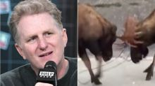 Michael Rapaport Is NSFW David Attenborough As He Narrates F**kin' Moose Fight