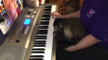 Cassie the Capuchin monkey plays the piano