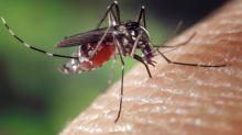 Punture di insetti, come difendersi per evitare rischi