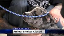 Sudden Rocklin Animal Shelter Closure Creates Adoption Rush