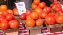 Tips for Growing and Cooking Tomatoes