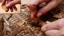 Archaeologists uncover 400,000-year-old early human 'tool kit' inside cave