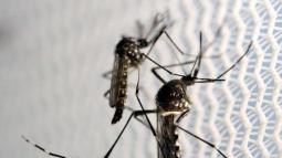 Florida announces Zika case hundreds of miles from Miami